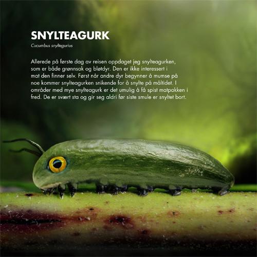 snylteagurk - 100 fabelaktige dyr